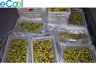Fresh Date  Cold Room / CA cold storage of Fruits And Vegetables